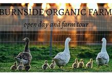 Burnside Organic Farm open day and farm tour