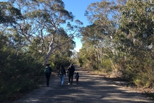 Guided Indigenous Walks in Dharawal National Park - O'Hare's Lookout Trail