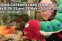 Curious Caterpillars Playgroup at The Tasmanian Museum and Art Gallery