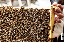 Beginners Backyard Beekeeping