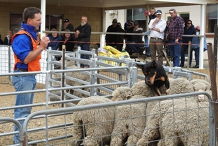 Connorville Yard Dog Trial / Farmers Trial