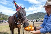 Horses Birthday Festival