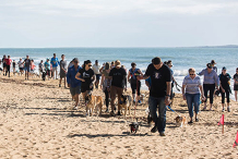 Gladstone PAWS Walk Postponed