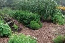 Earthcraft Home Gardening with Fil & Helen