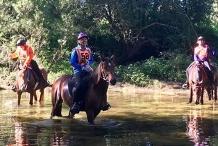Greg Willoughby Memorial Endurance Ride 2020