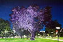 Adelaide Parklands Art Prize  Finalists Exhibition & Sale 2020