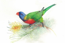 Learn to Paint Watercolour - 1 Day Art Class Gold Coast