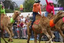 Camel Races at Penrith Paceway 2020