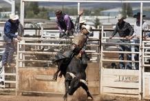 2020 PBR Bull Mania - Burnett Heads