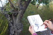 Drawing from Nature – Plein Air Workshop