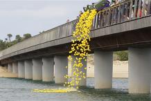 Return of the Great Barwon Heads Duck Race