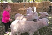 Taste Coleambally- Food and Farm Festival