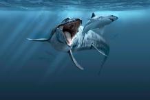 Sea Monsters - Prehistoric Ocean Predators