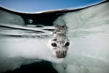Elysium Arctic