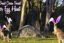 The Great Corin Forest Easter Egg Hunt of 2020!