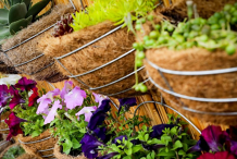 Hanging Basket Competition