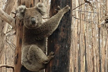 Kangaroo Island Wildlife Relief fundraiser