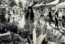 Yamba Farmers and Producers Market