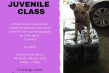 Daylight Savings Juvenile Class