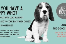 SOLD OUT 4 week Puppy Class- Starts 13TH JULY 6:15pm