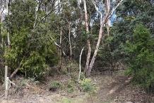 South Hobart Bushcare Volunteer Activity - July 2020