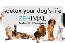 Detox your Dog's Life