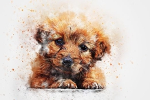 Paint your dog - Pet Friendly Painting Session in Richmond