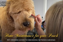 Home Maintenance For Your Pooch