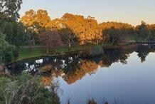 Guided Walk through Bonython Park / Tulya Wardli (Park 27)