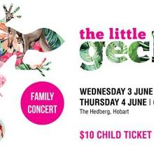 The Little Gecko