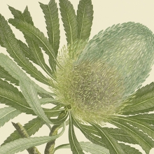 Voyage of Discovery: Sir Joseph Banks' Florilegium