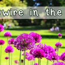 Qwire in the Park – FREE Concert / Picnic