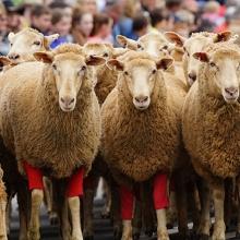 Rosto Merriwa Festival of the Fleeces