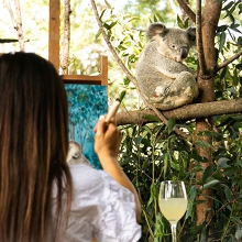 Paint and Sip with Koalas