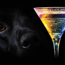 Archie's Ball - Canines & Cocktails 2020