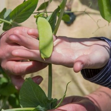 Introduction to Therapeutic Horticulture Course