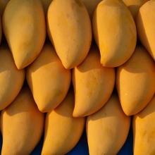 Mango Madness Festival