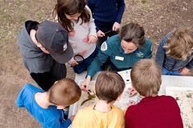 Junior Rangers Minibeast Discovery - Albert Park