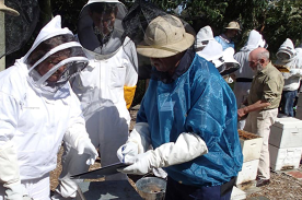 Bees: Beginners' Hands-on Beekeeping Course (16th February & 15th March 2020)