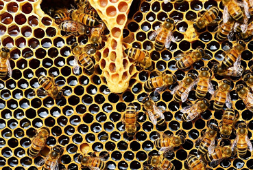 Inside the hive - busy, humble, hardworking honeybees