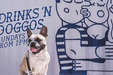 Bottomless Drinks 'n Doggos