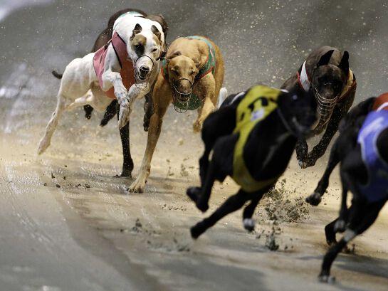 Greyhound Racing Night