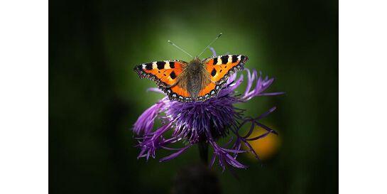 Get online week: Bird, bee and butterfly attracting gardens