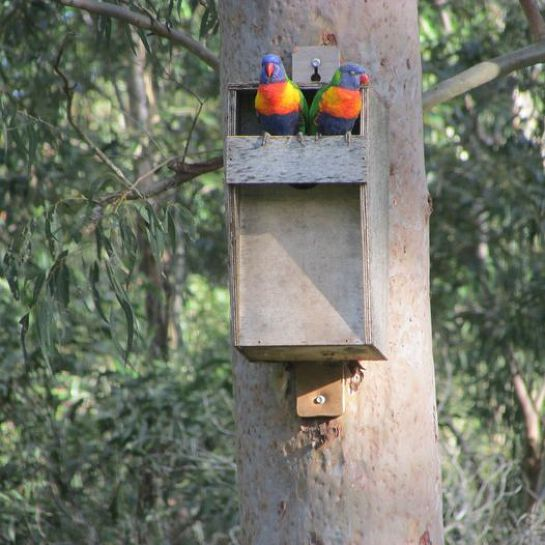 Habitat for Urban Wildlife: Hollows and Nestboxes (Online)