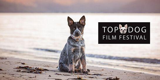 Top Dog Film Festival - Canberra Thurs 22 Oct 2020