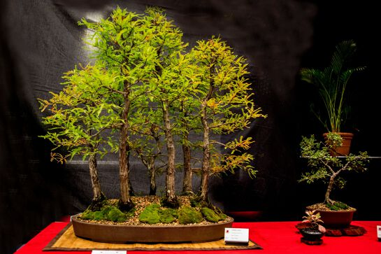 The Hastings Bonsai Group Inc.