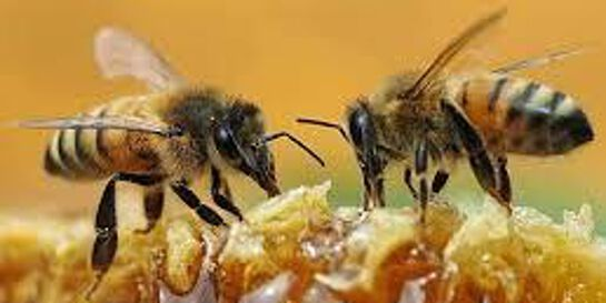 So, I want to get bees, what next?