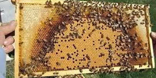 Managing your beehive for maximum results