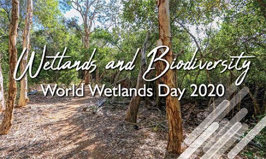 World Wetlands Day (2 Feb)