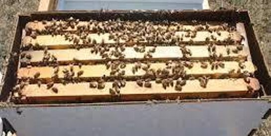 Inspecting the health of your bee hive